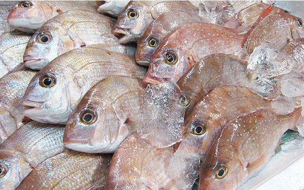 お食い初めで鯛を用意する
