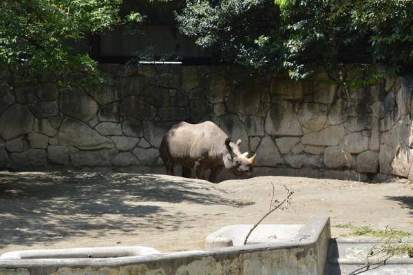 上野動物園の貸し出しベビーカーは使える?