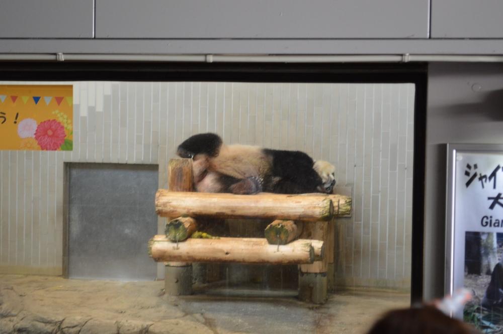上野動物園は雨でも楽しめます!