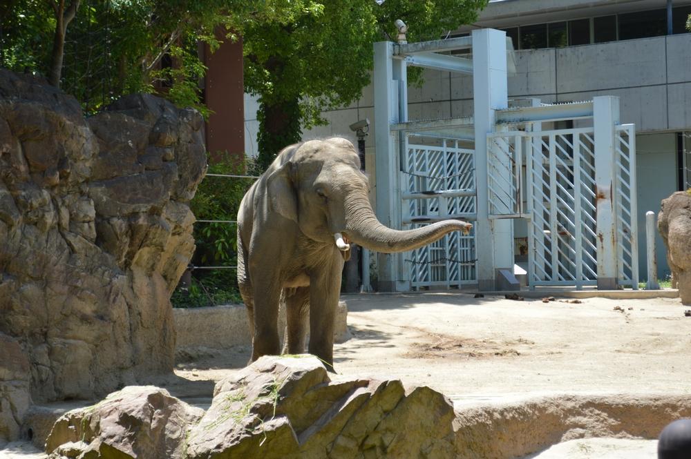 上野動物園をしっかり回るときの所要時間。