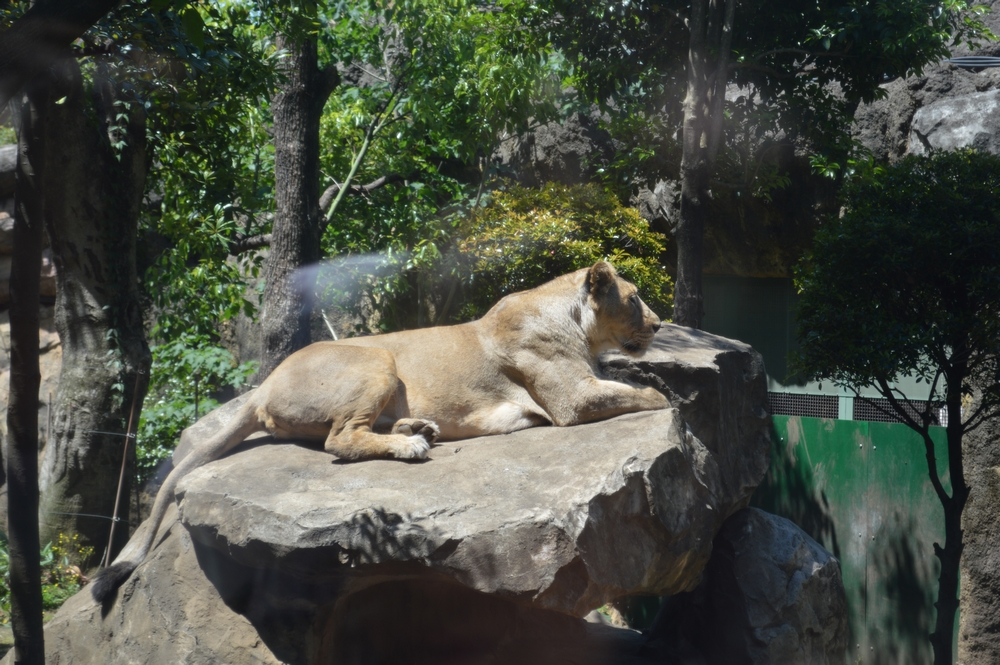 上野動物園、2016年のGW(ゴールデンウィーク)の混雑状況と無料入園のお知らせ。