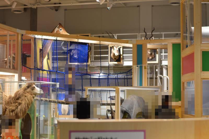 上野の国立科学博物館に行ってきた!地球館のリニューアルでミイラの展示もあり・・・混雑回避の食事そして3Fコンパスにいってきた。