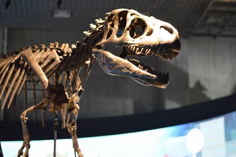 小学生中学生が1日でできちゃう恐竜の自由研究のまとめ方と参考資料