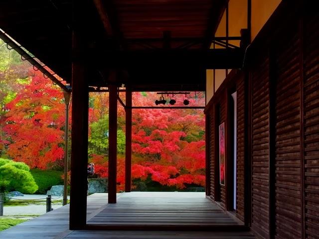 京都の紅葉ライトアップのおススメの5つのスポット、2015の見ごろ時期はいつ?