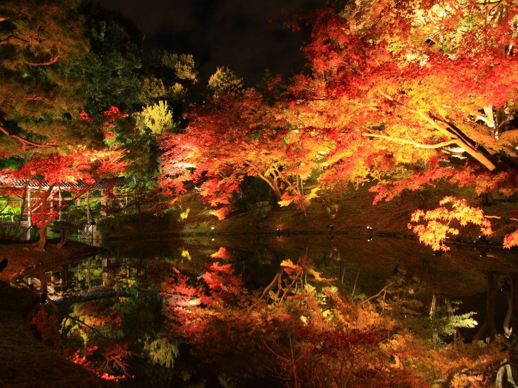 高台寺の紅葉ライトアップ(夜間拝観)情報・料金や時間 期間とアクセス方法