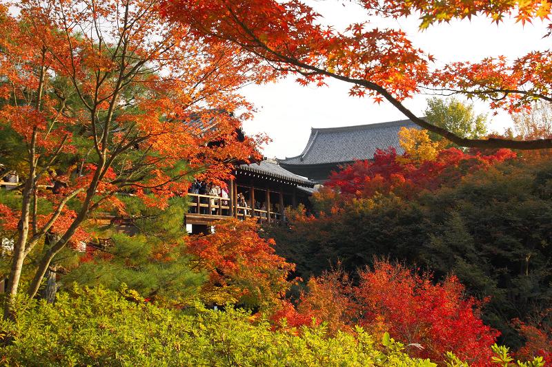 京都の紅葉は東福寺。見頃の時期や混雑状況、ライトアップ、アクセスについて。