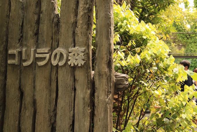 上野動物園で人気の展示、ゴリラの一家の名前などや見所