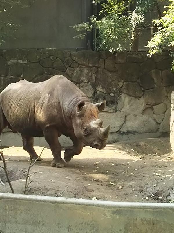 上野動物園の混雑が変わっている。整備中の箇所がいろいろあってしかも遊園地が閉鎖。